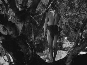 Tarzancolescapescap