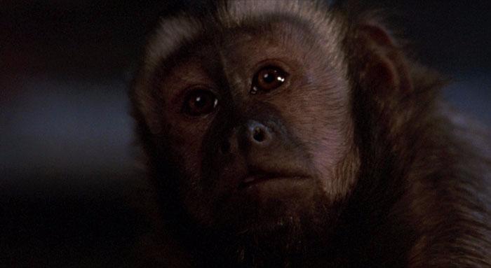 Monkeyshines1